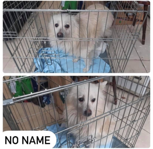 Hund ohne Namen