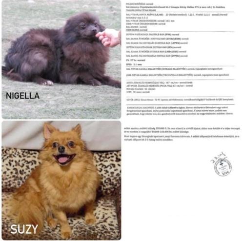 Suzy & Nigella